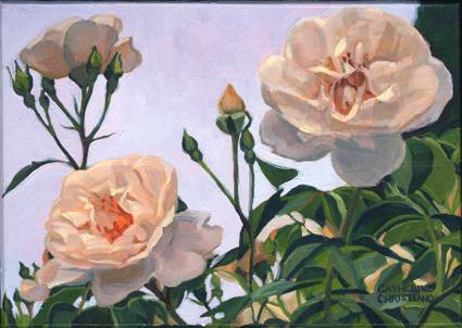 00976-O_Roses_2_copyright_C_Christiano